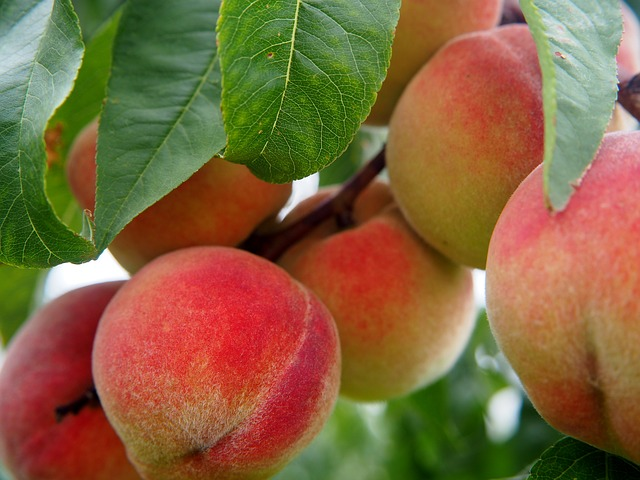 peach-2632182_640